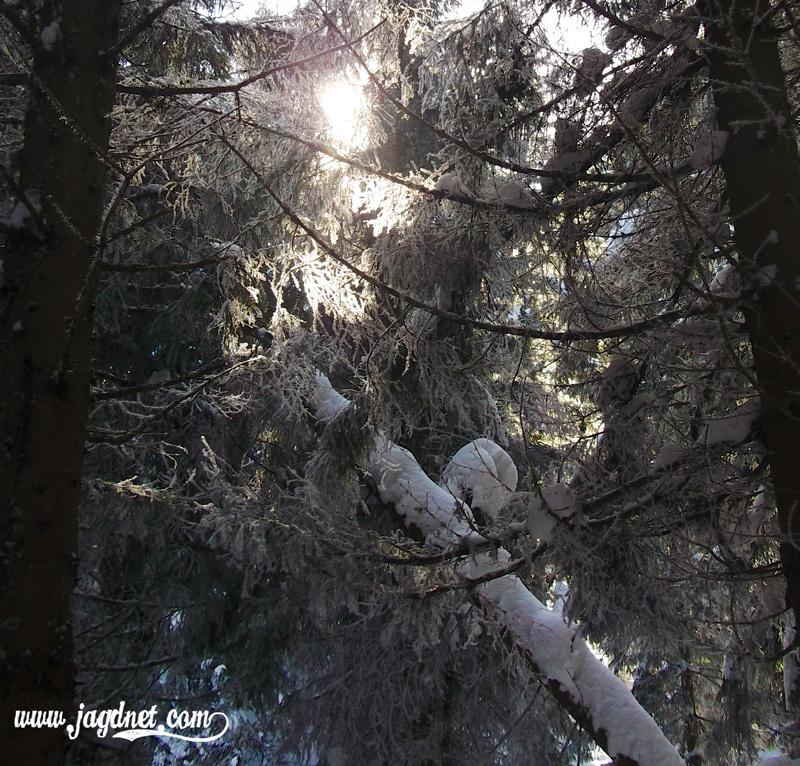 Gefrorene Zweige