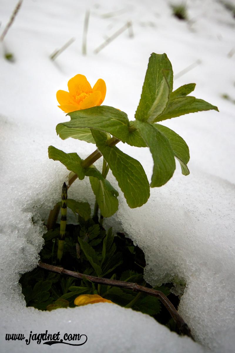 Mai-Schnee-2