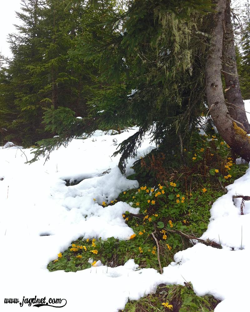 Mai-Schnee-4