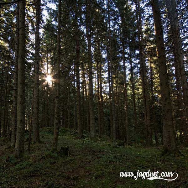 Revier-Jagd-Impressionen-Oktober-02